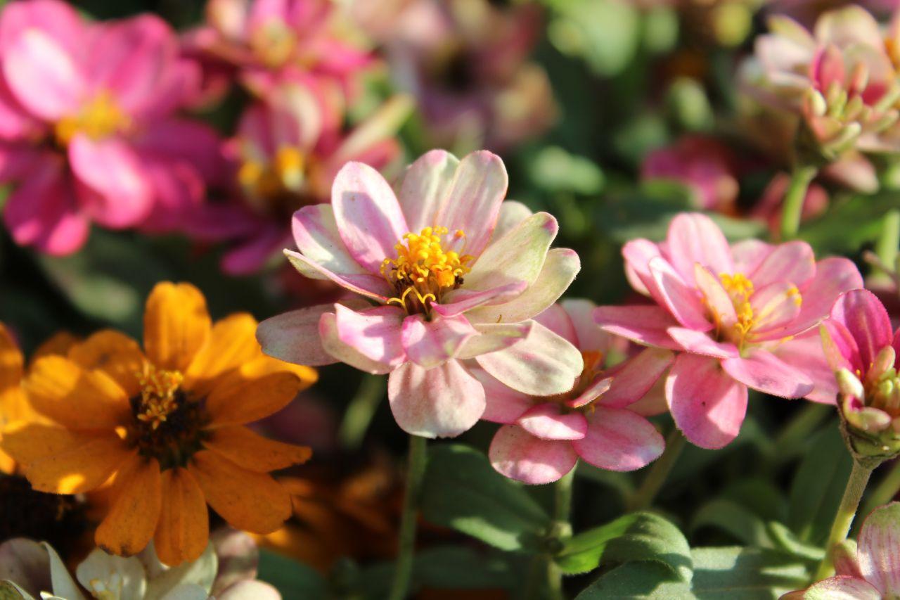 "Free photo ""Flower Garden Beautiful"""