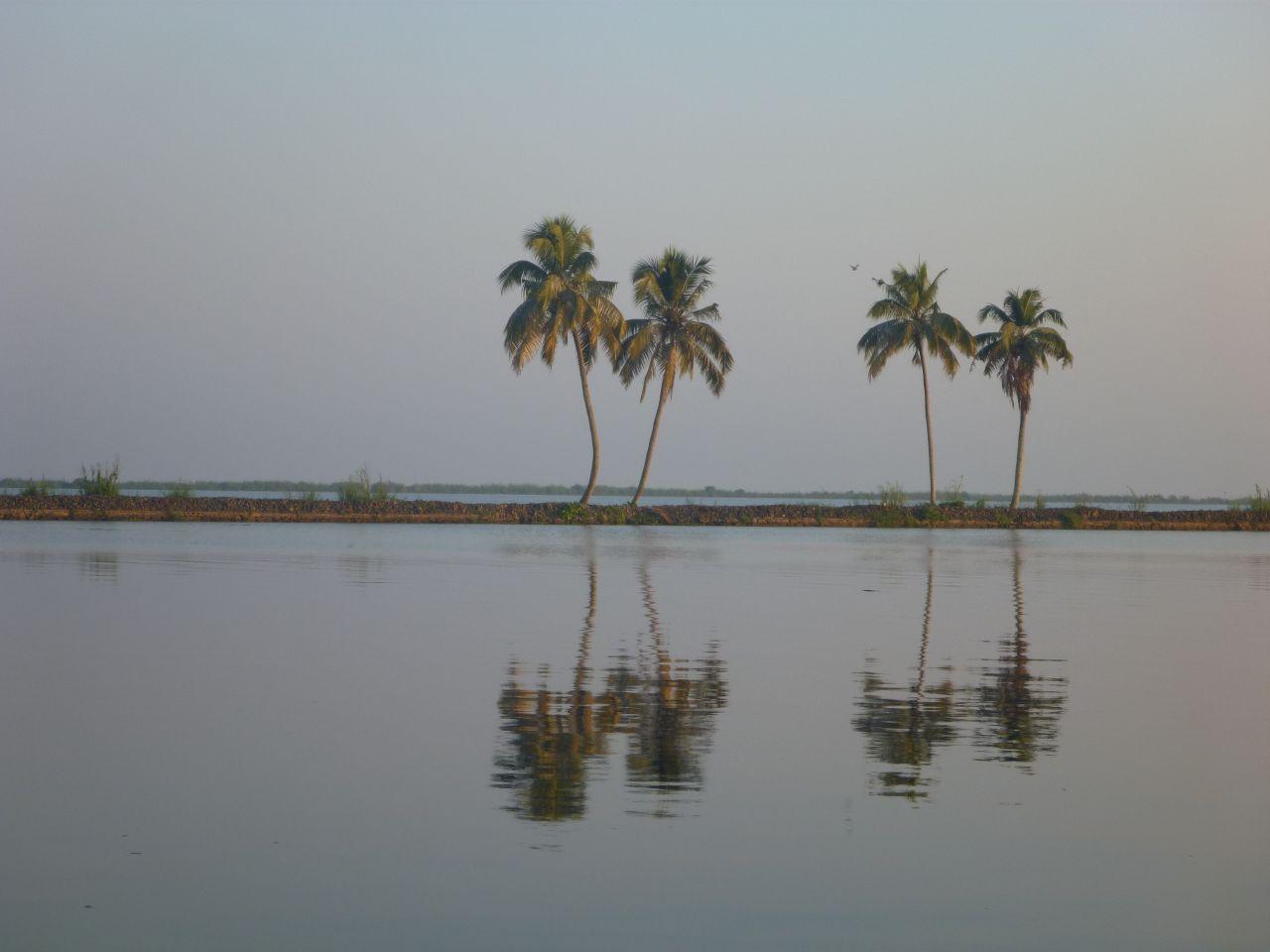"Free photo ""Palm Coconut Trees Reflection"""