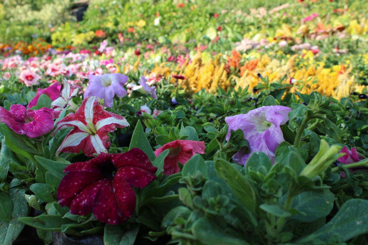"Free photo ""Beautiful Flower Garden"""