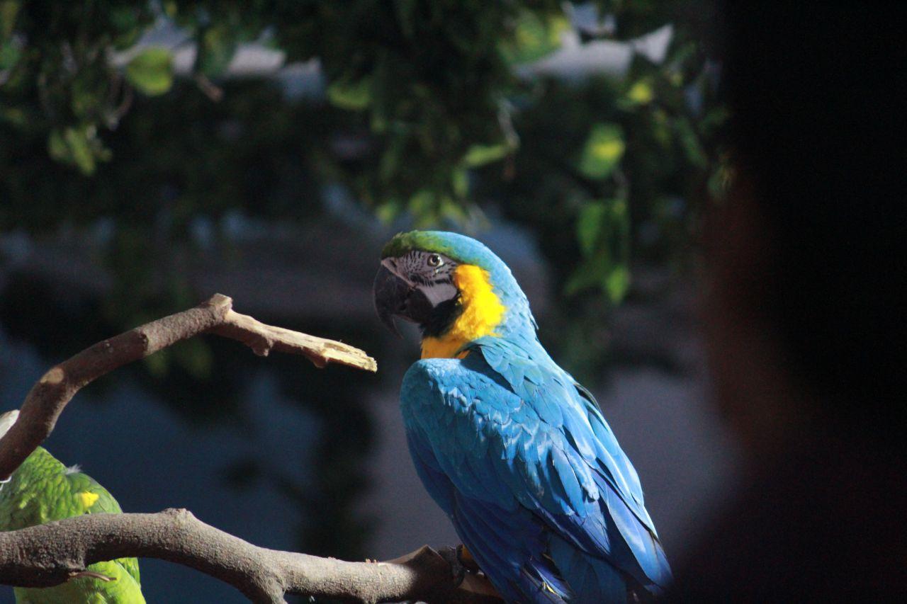 "Free photo ""Blue Parrot"""