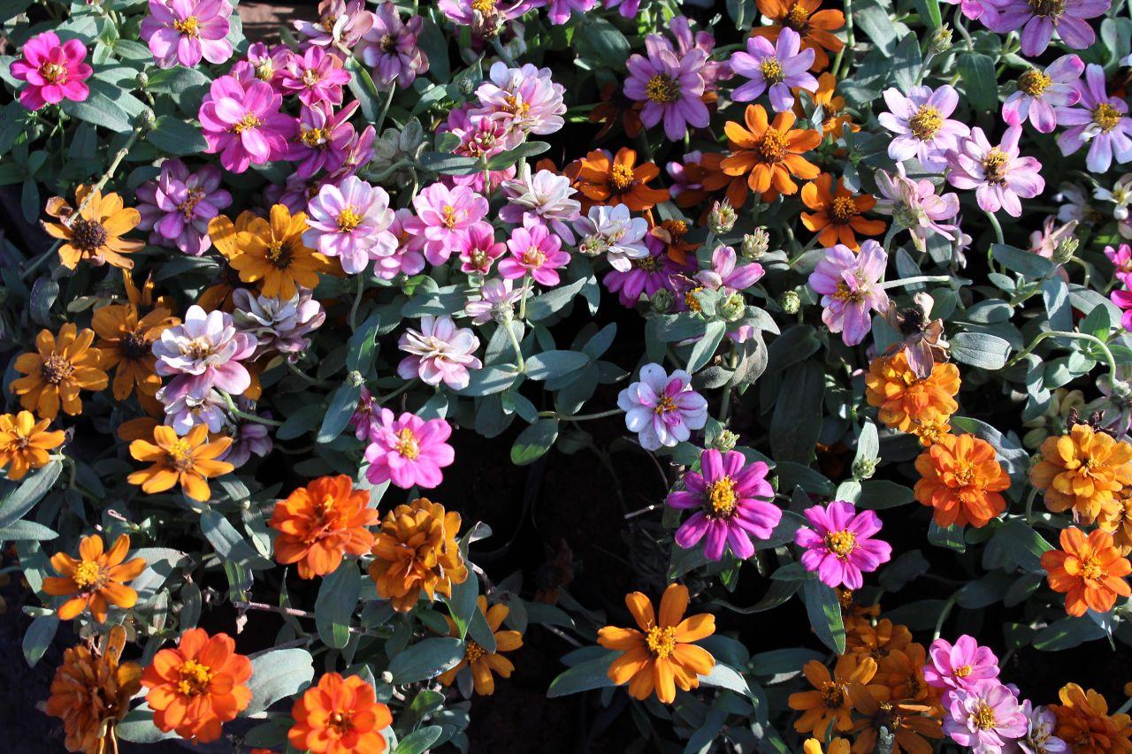 """Free photo """"Flower Garden"""""""