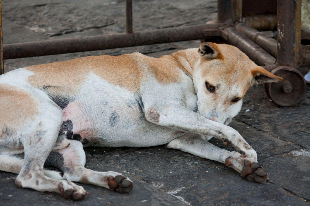 "Free photo ""Dog Sleep"""