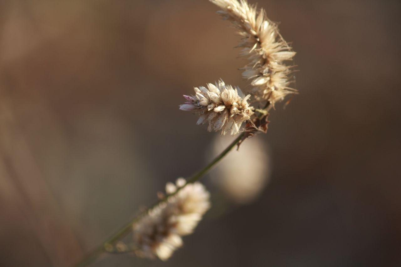 """Free photo """"Shrub Bush Closeup Plants"""""""