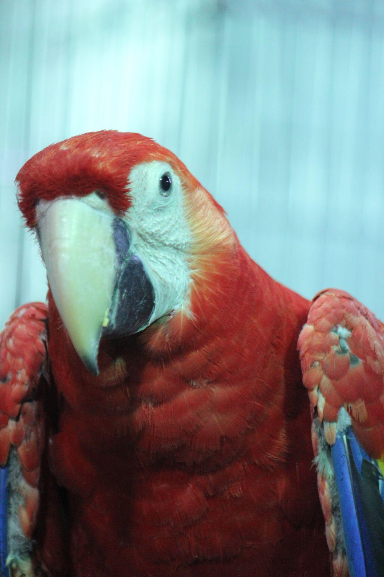 """Free photo """"Macaw Parrot Portrait"""""""