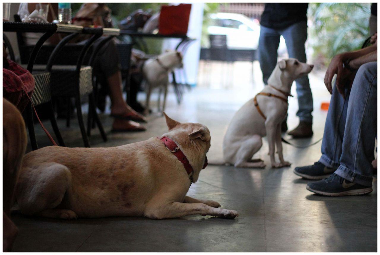 "Free photo ""Dogs Friends Sitting"""