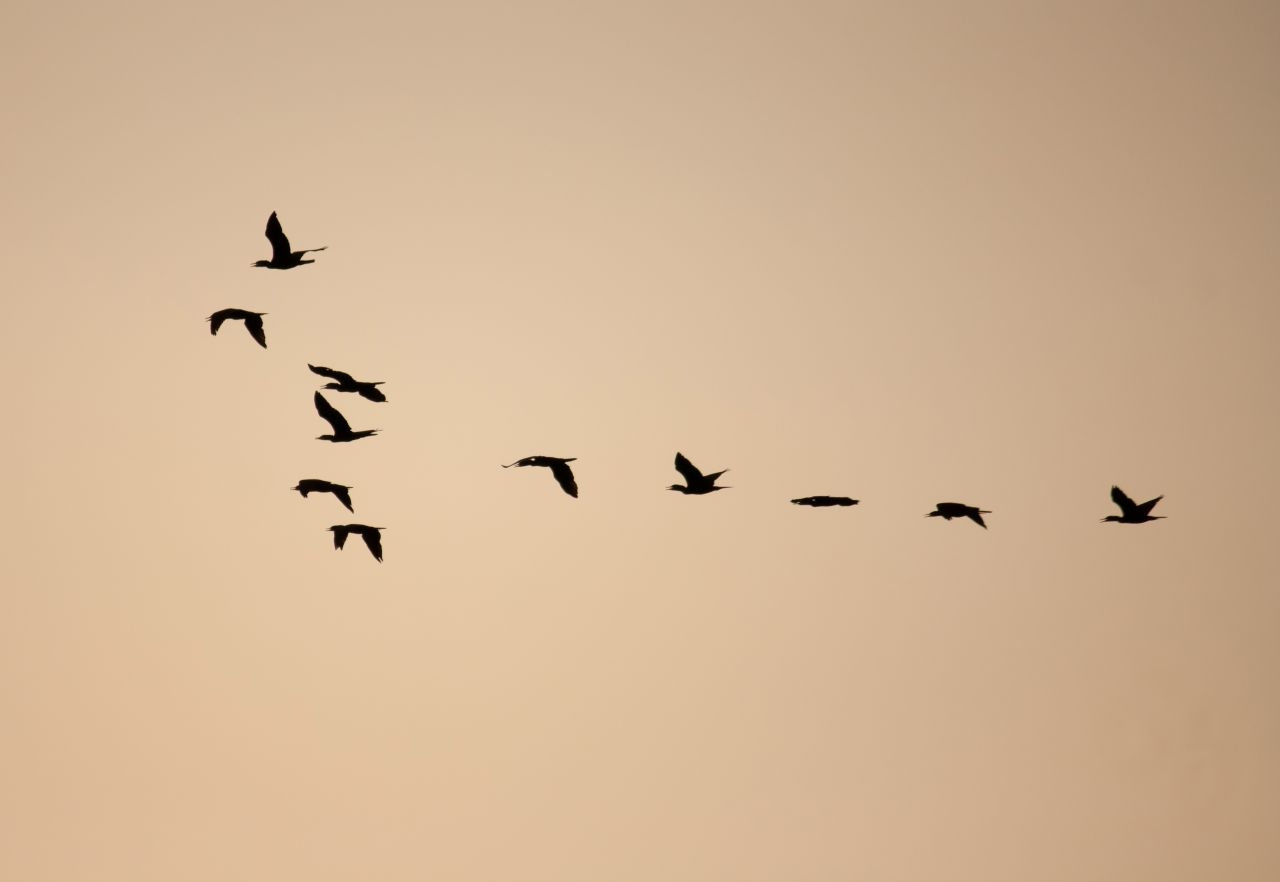 "Free photo ""Birds Formation"""