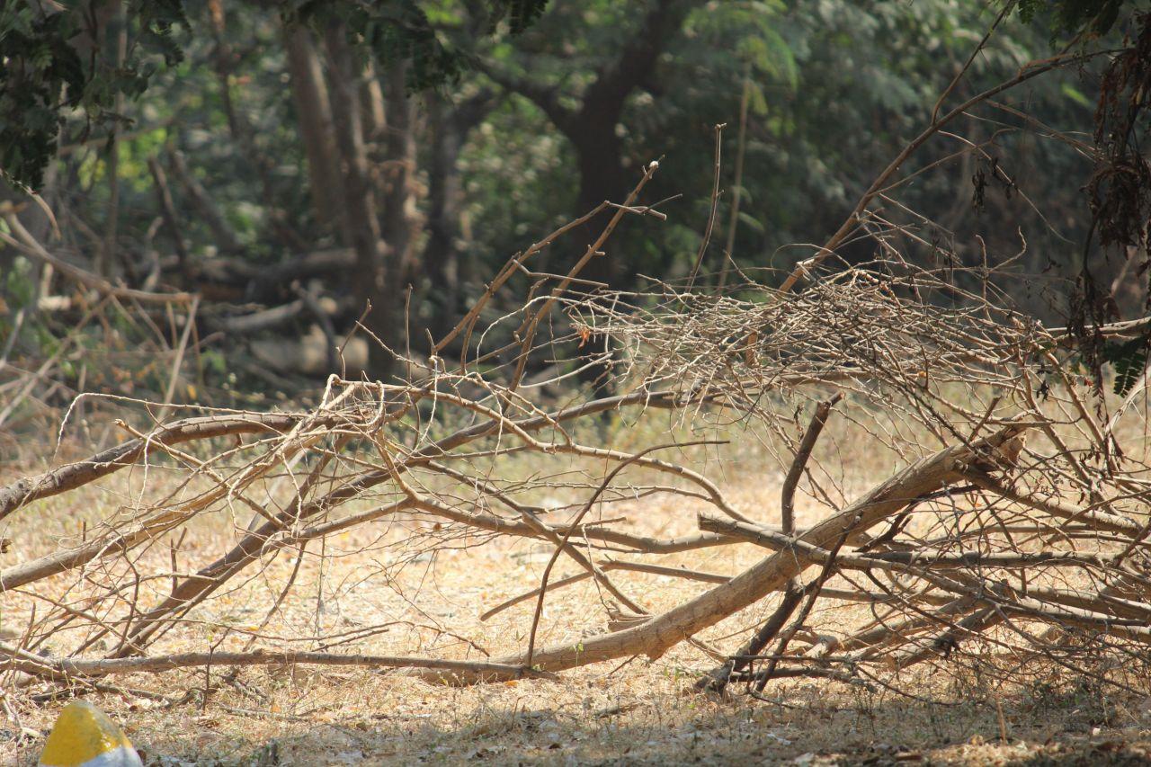 "Free photo ""Forest Shrubs Bushes"""