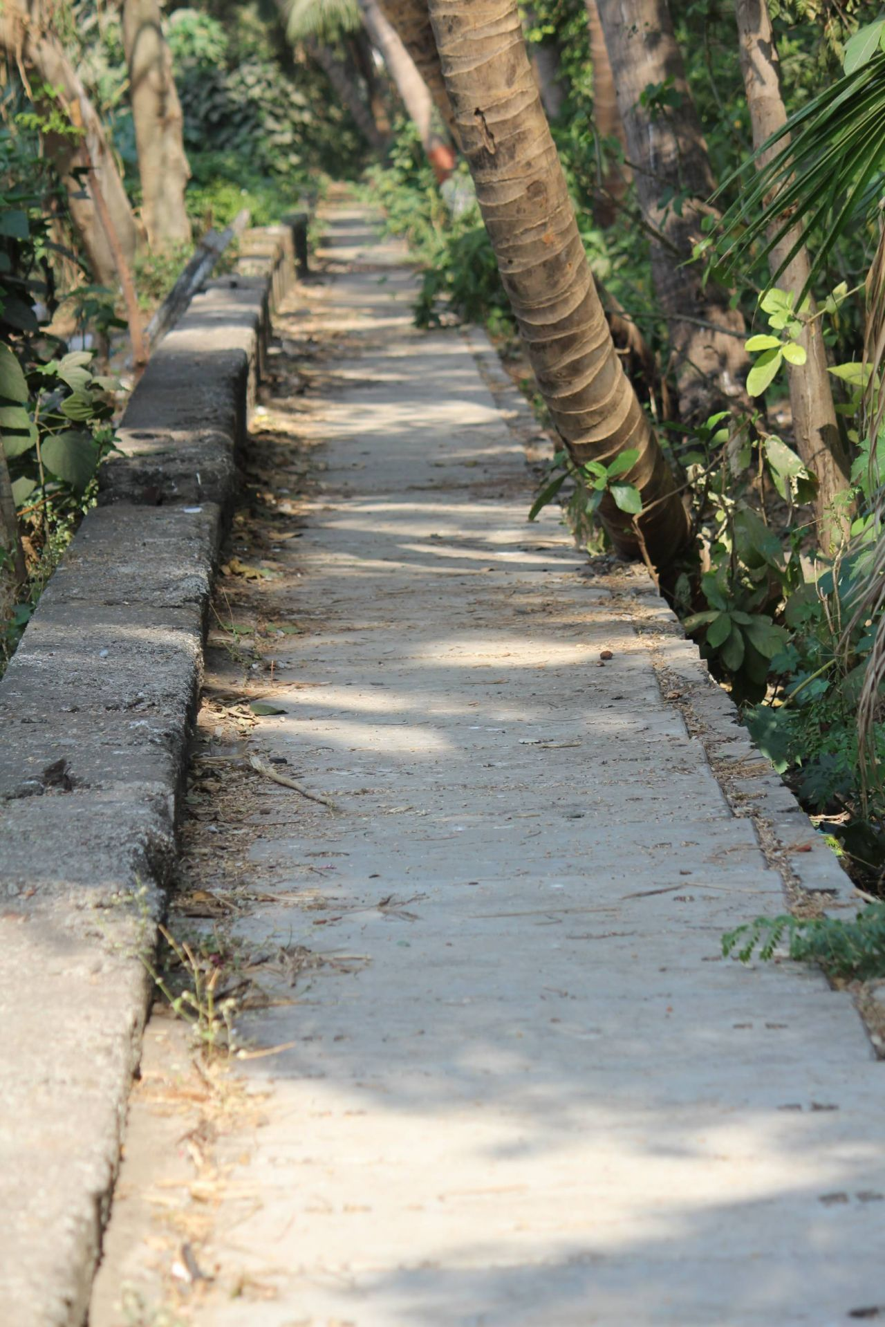 "Free photo ""Garden Path Concrete"""