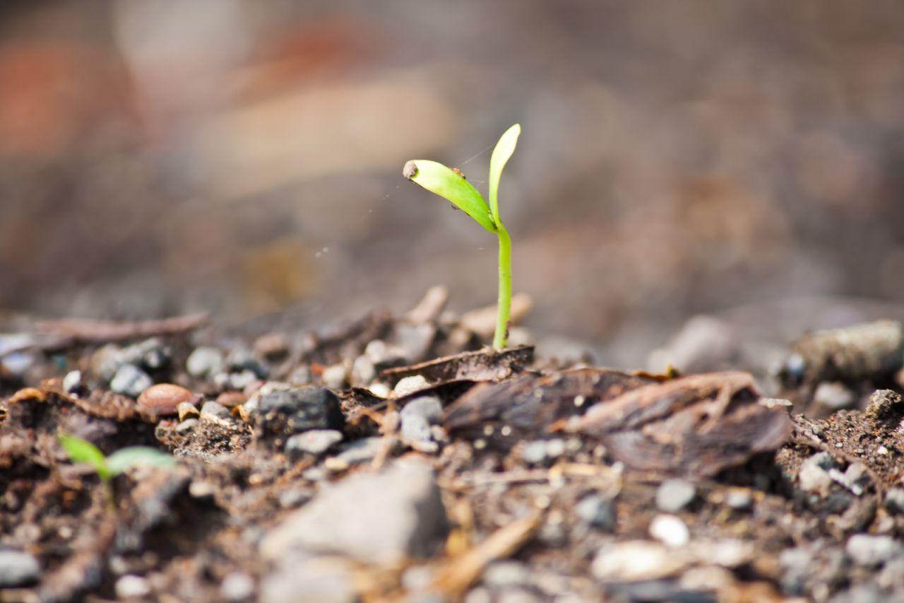 "Free photo ""Sapling Green Living"""