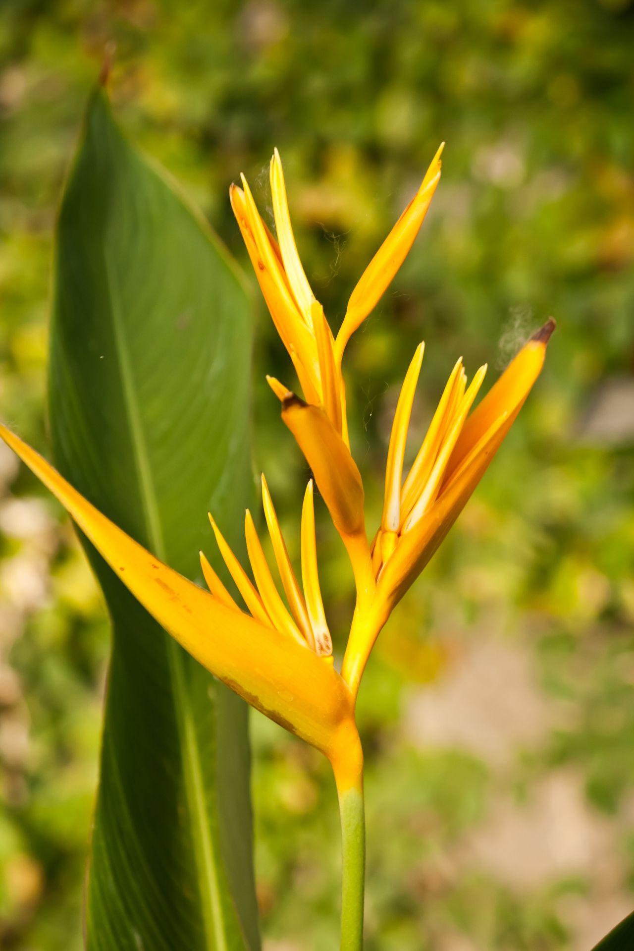 """Free photo """"Yellow Flower"""""""