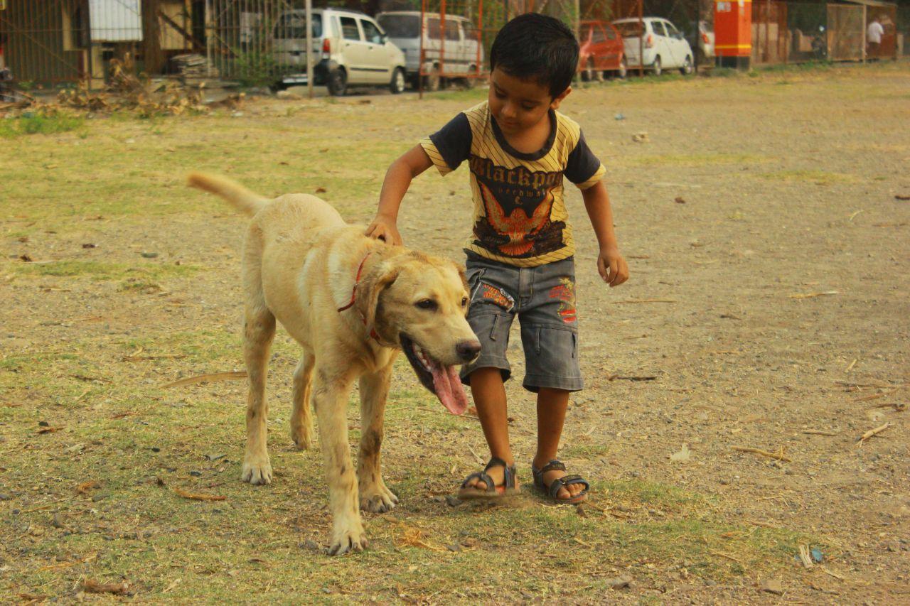 "Free photo ""Kid Dog"""