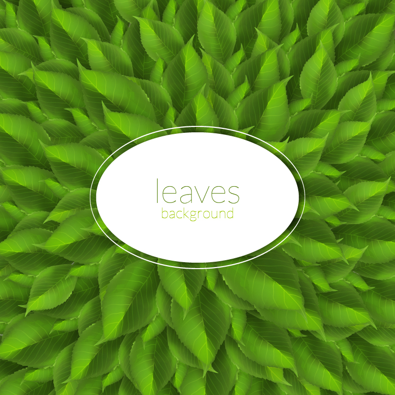 "Free vector ""Green leaves texture with modern label"""