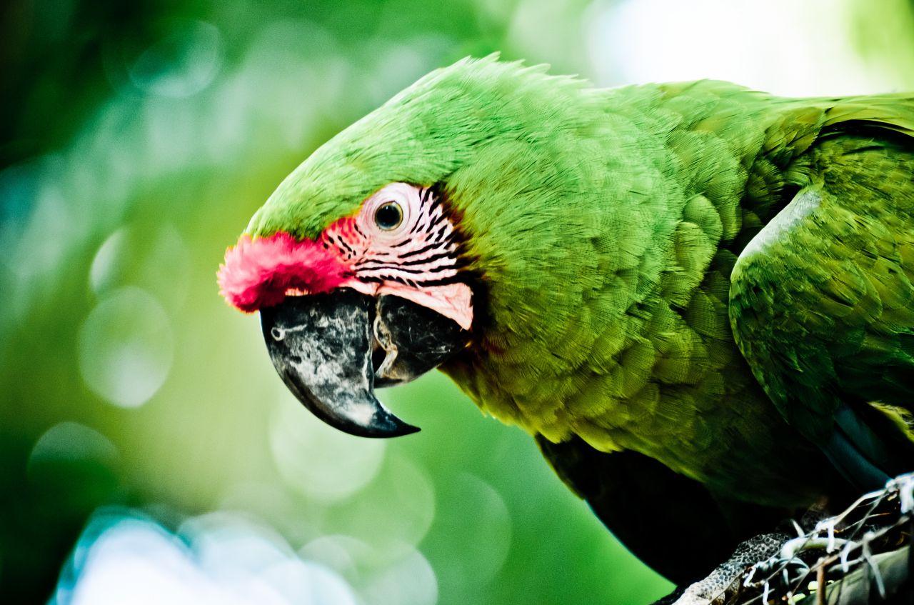 "Free photo ""Avian"""