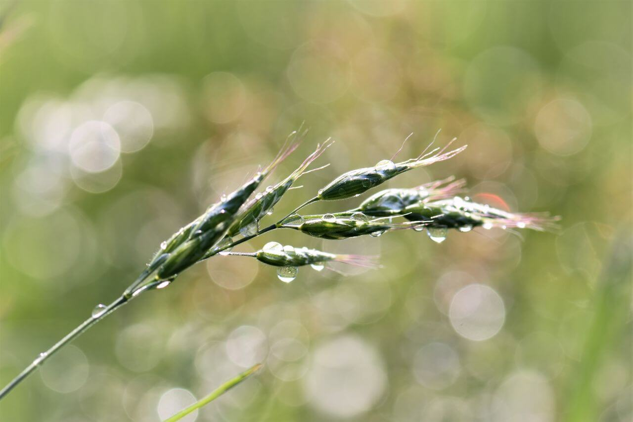 "Free photo ""Blade of grass"""