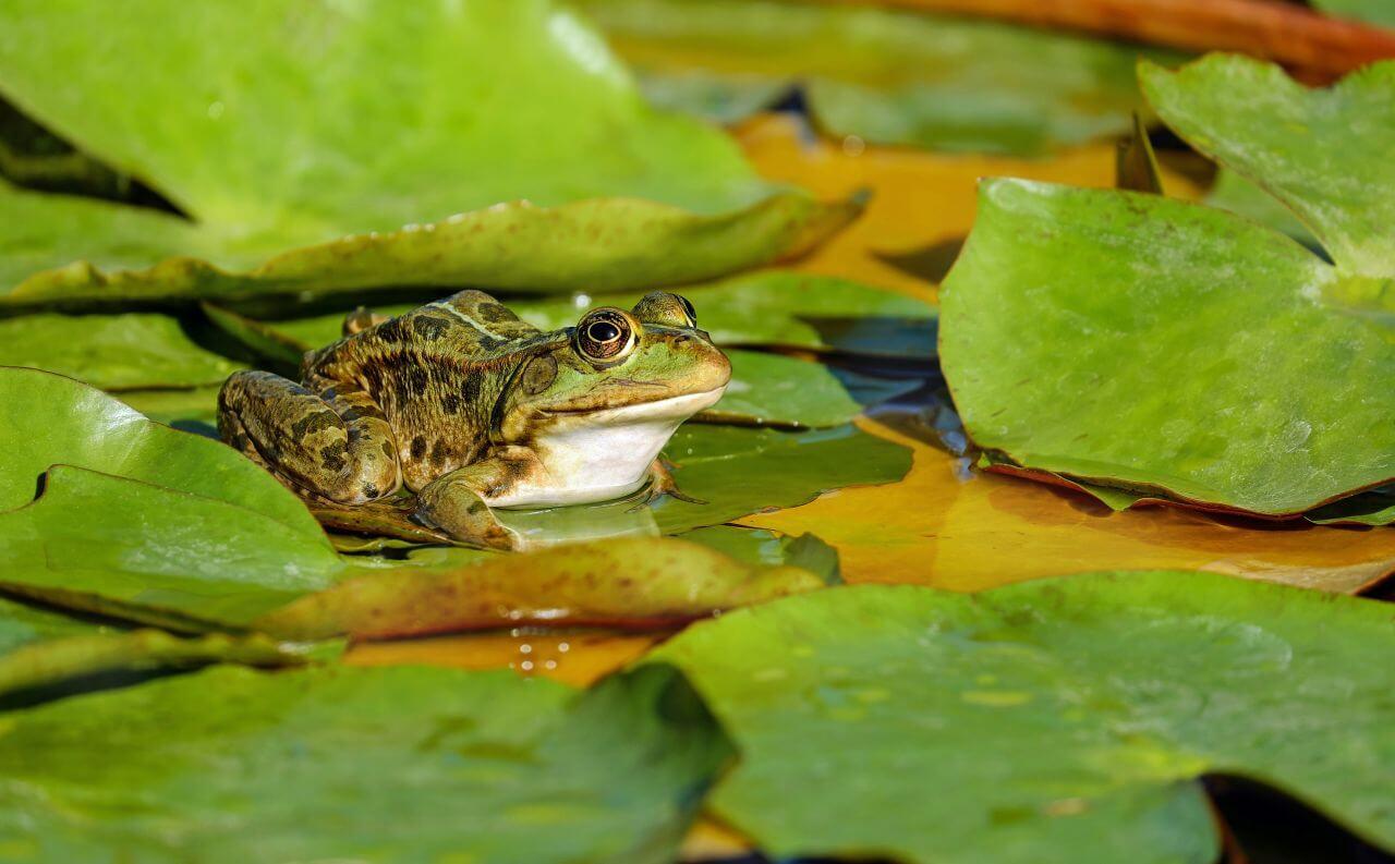 """Free photo """"Amphibian"""""""