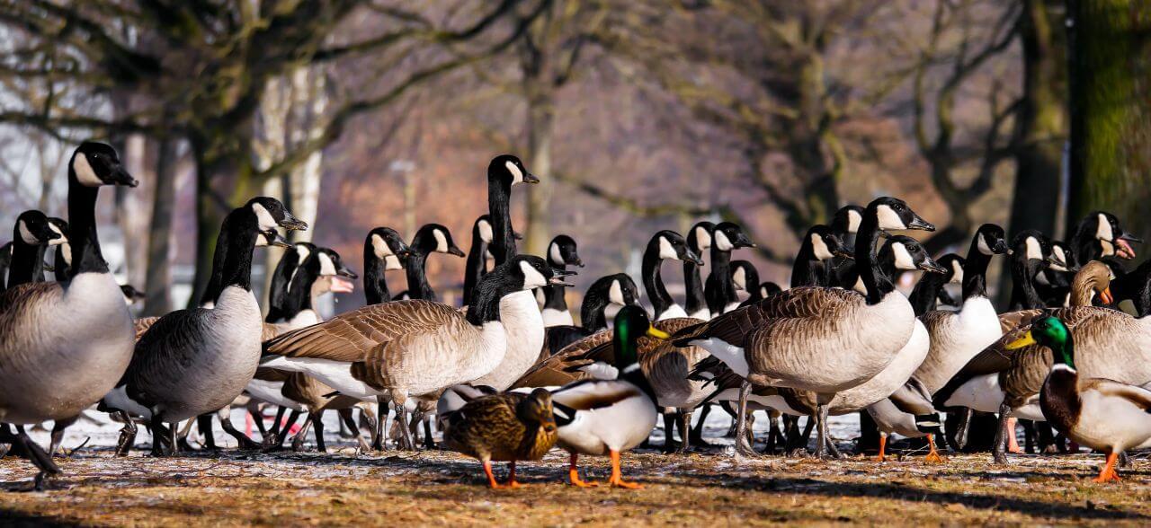 "Free photo ""Animals"" by Gerhard Gellinger"