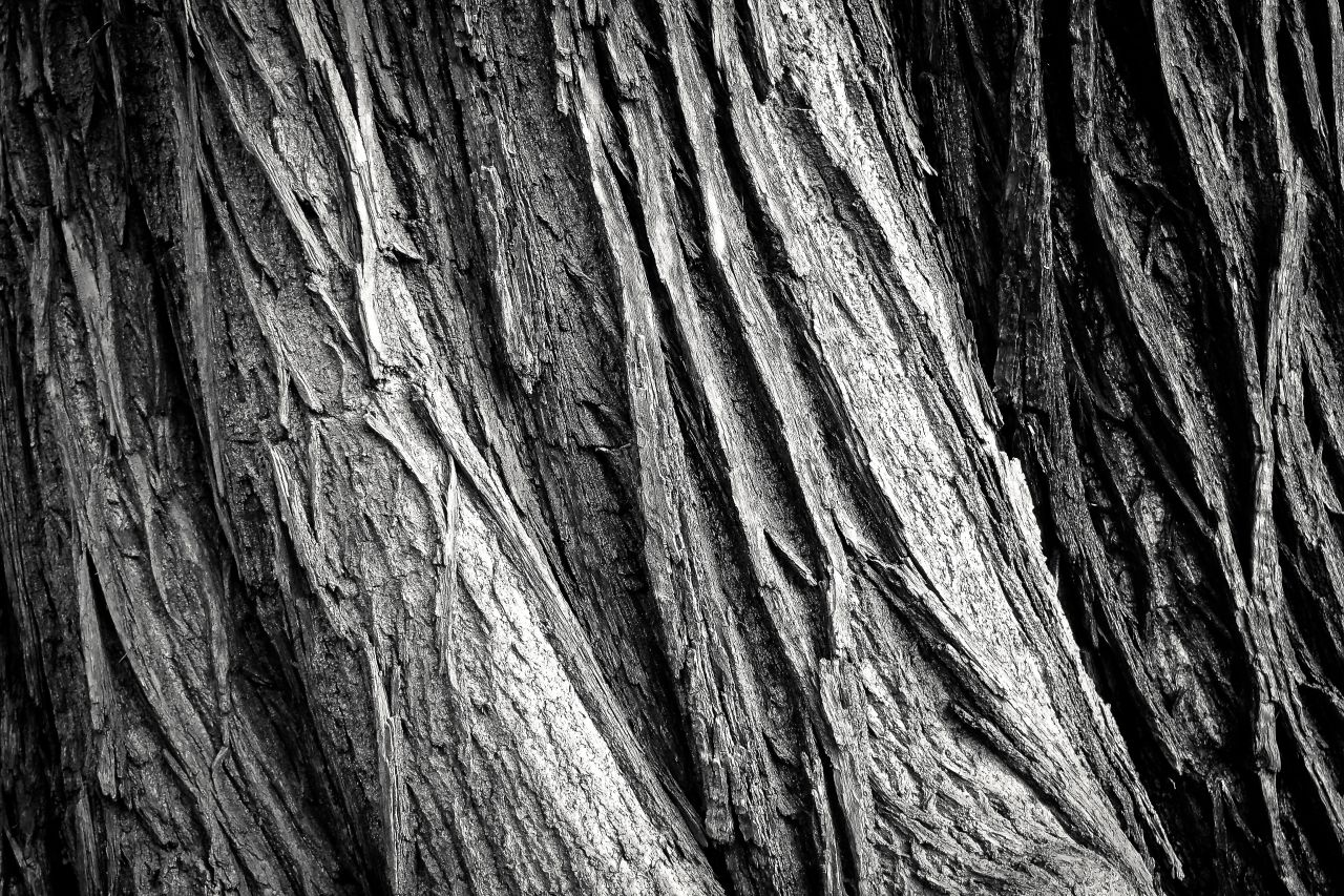 "Free photo ""Abstract"" by Michael Gaida"