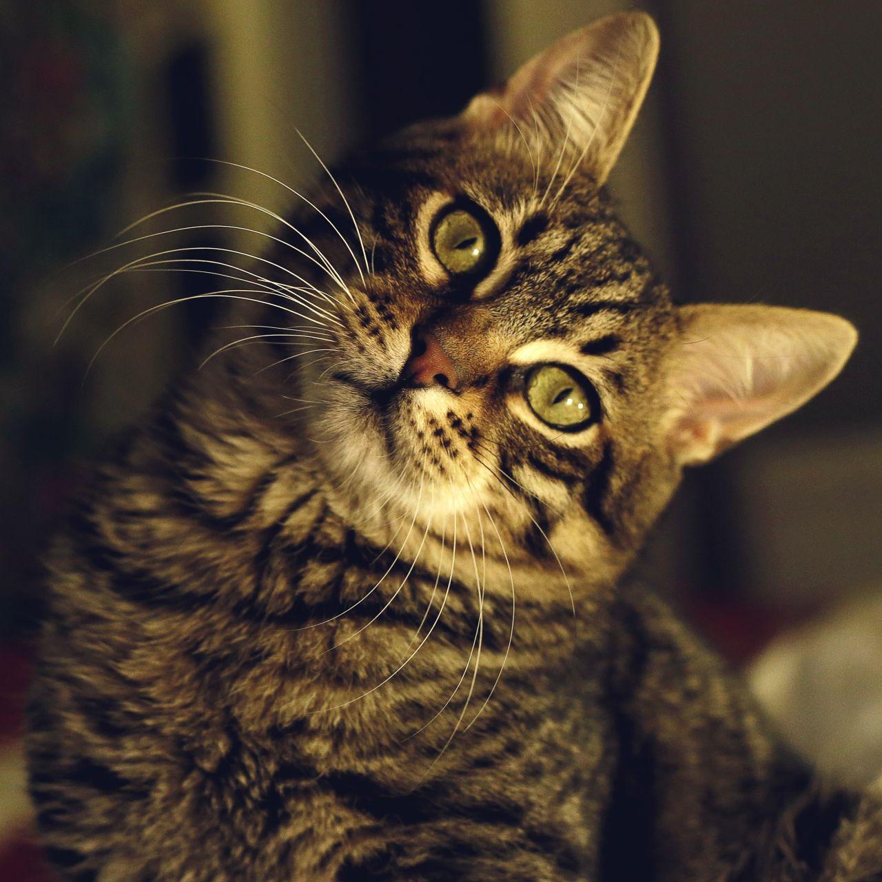 "Free photo ""Cat"" by Türkçe"