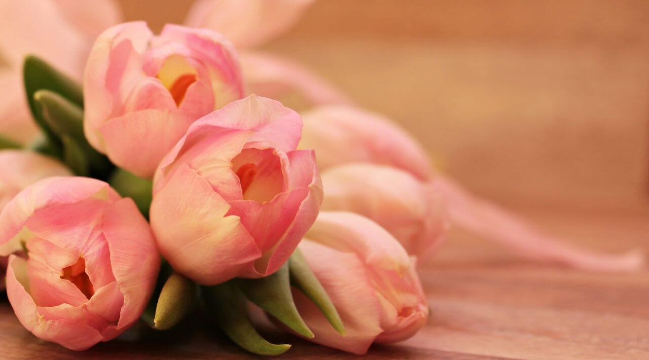 """Free photo """"Pink Flowers"""" by Silvia"""
