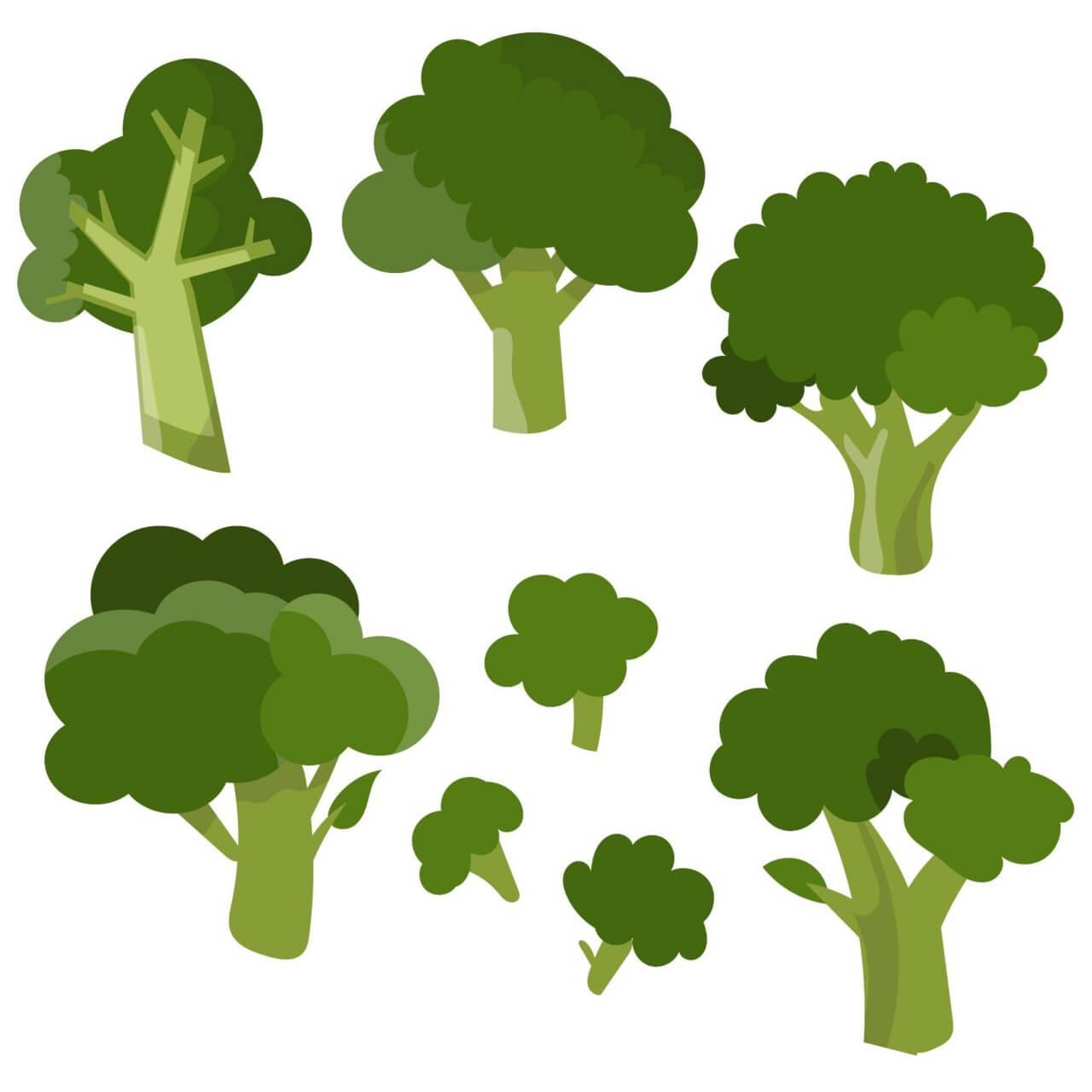 free vector fresh broccoli vector set free vector fresh broccoli vector set