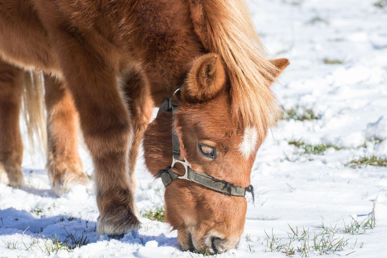 "Free photo ""Horse"" by Dieter Metz"