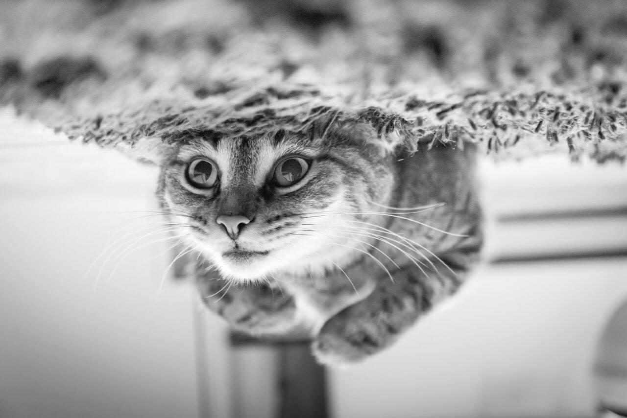 "Free photo ""Cat"""