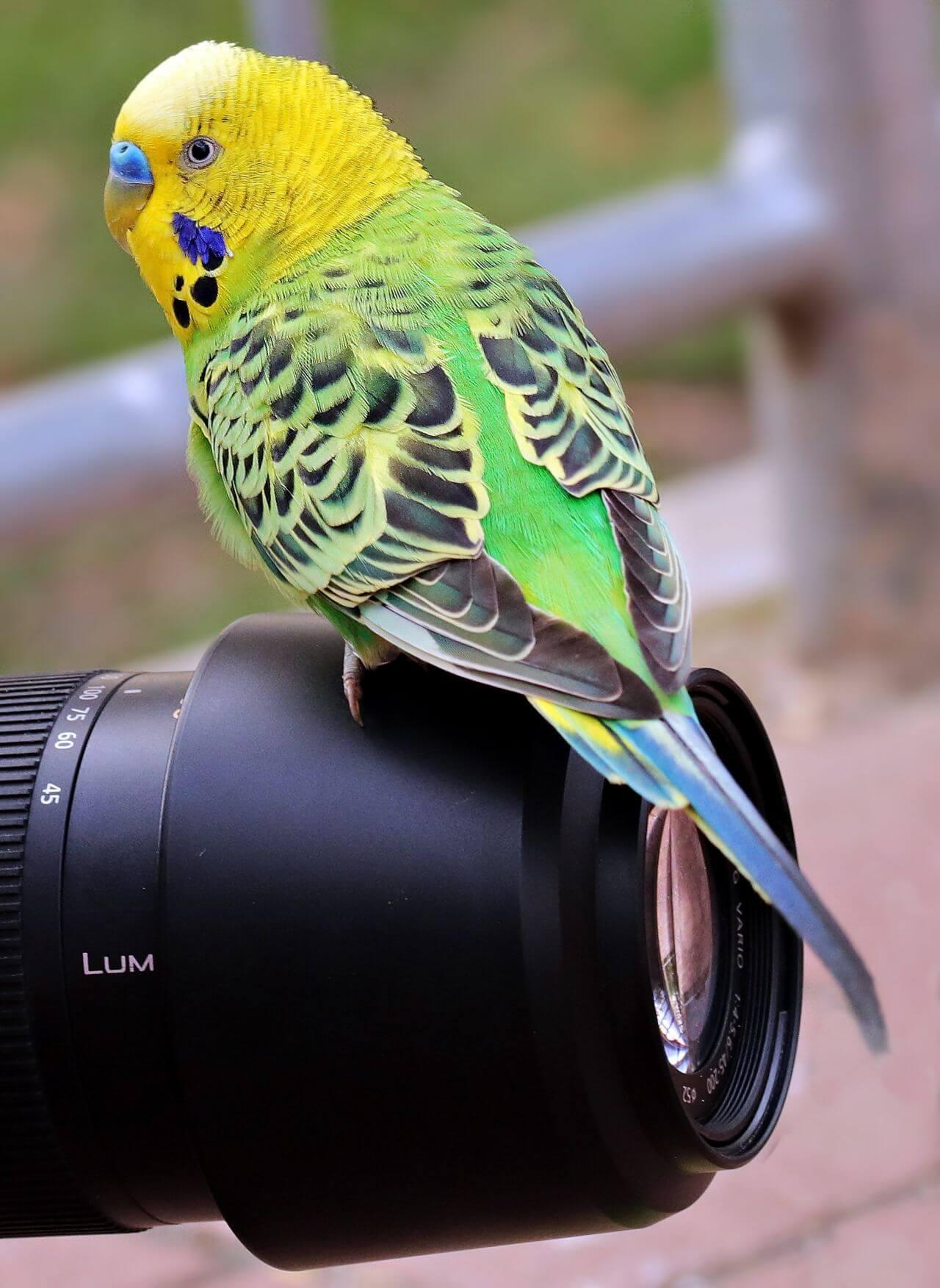"Free photo ""Bird"" by Silvia"
