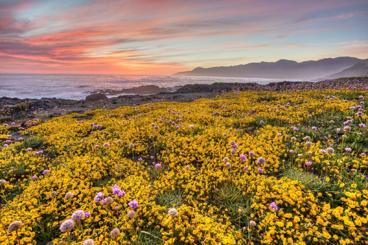"""Free photo """"Yellow Flowers Growing in Field at Sunset"""" by USA"""