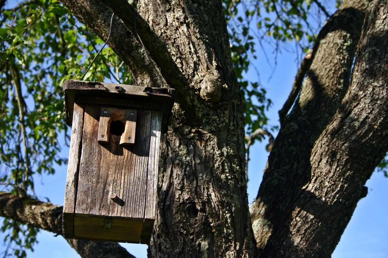 "Free photo ""Birdhouse"" by Deutsch"