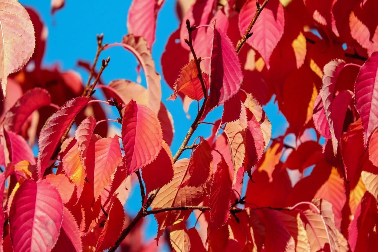 """Free photo """"Autumn"""" by Ilona"""