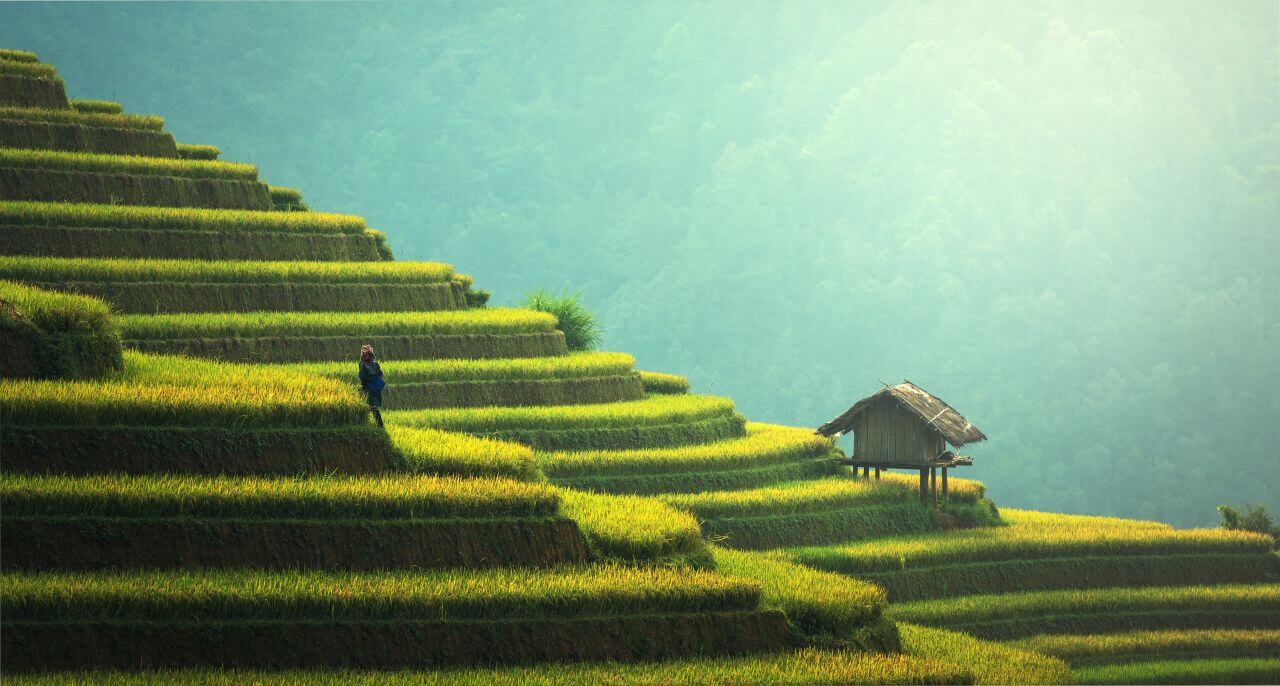 "Free photo ""Agriculture"" by Sasin Tipchai"