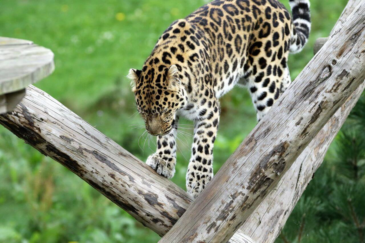 """Free photo """"Animal"""" by Kevin"""