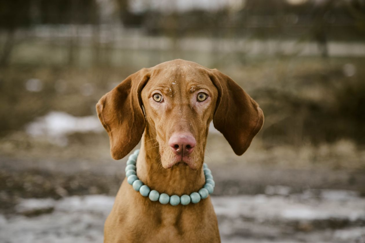 "Free photo ""Dog"" by Zivile& Arunas"