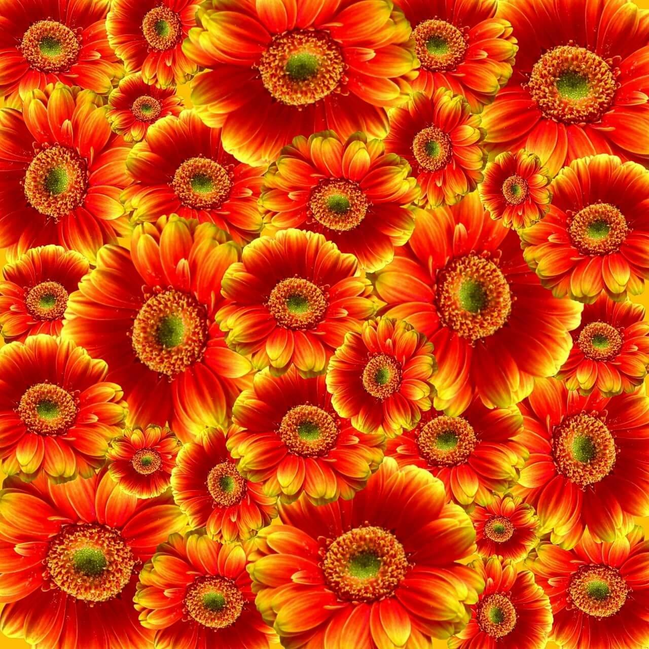 """Free photo """"Bloom"""" by NRW/Deutschland"""