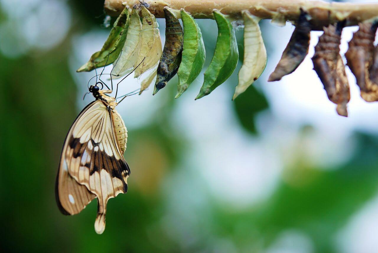 """Free photo """"Butterfly"""" by Skandinavien"""