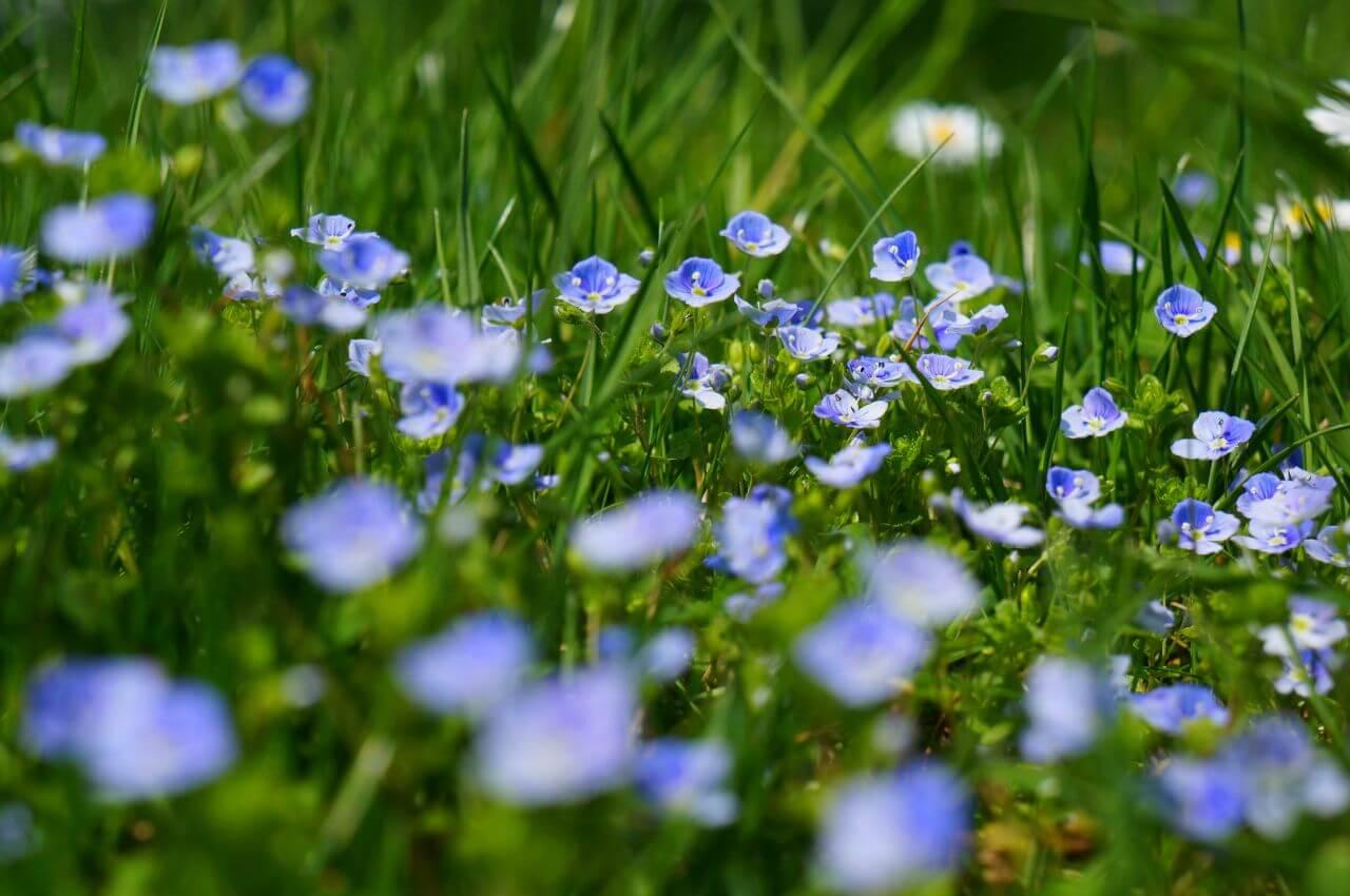"""Free photo """"Bloom"""" by Deutsch"""
