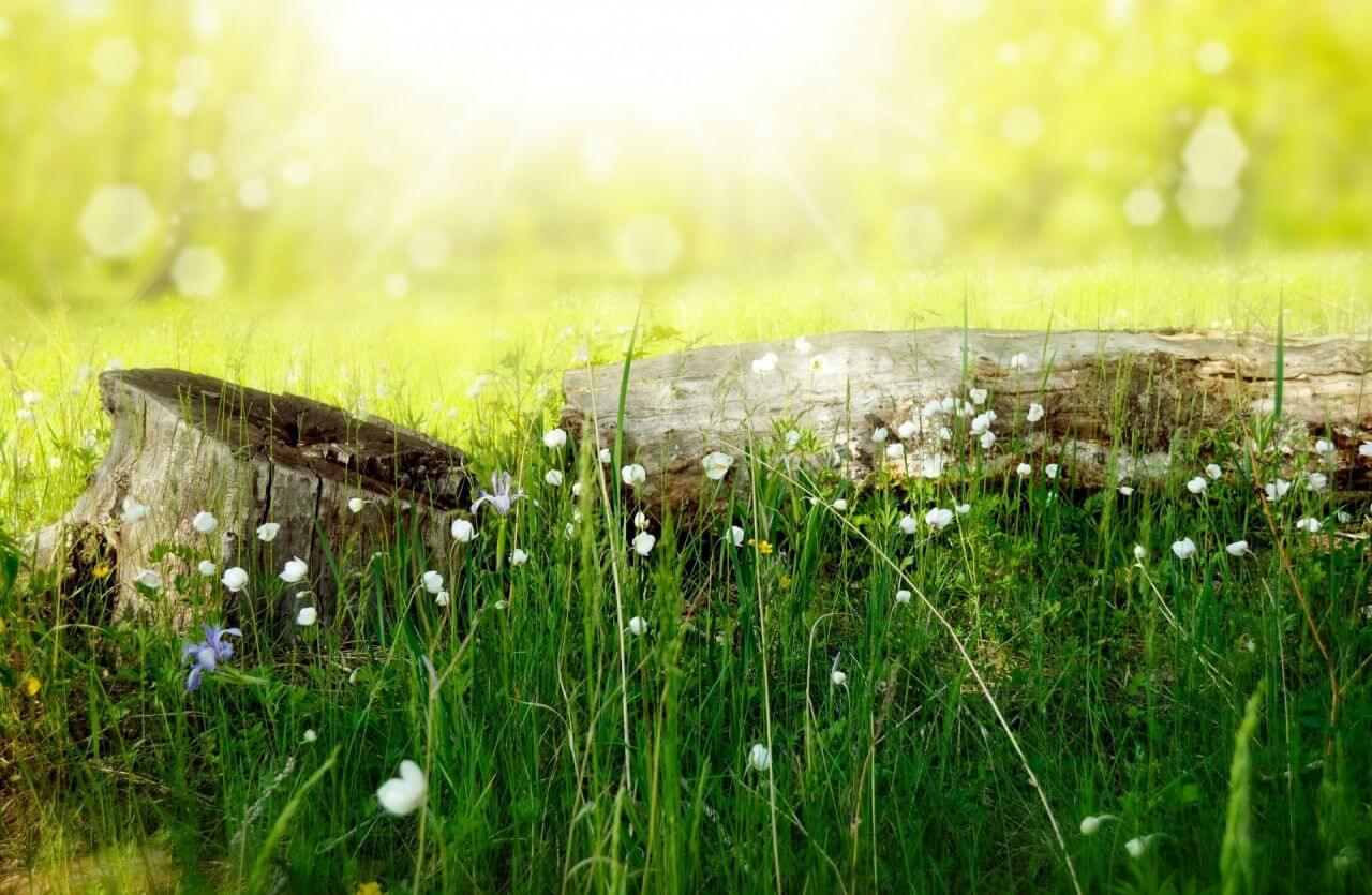 """Free photo """"Background"""" by Larisa Koshkina"""