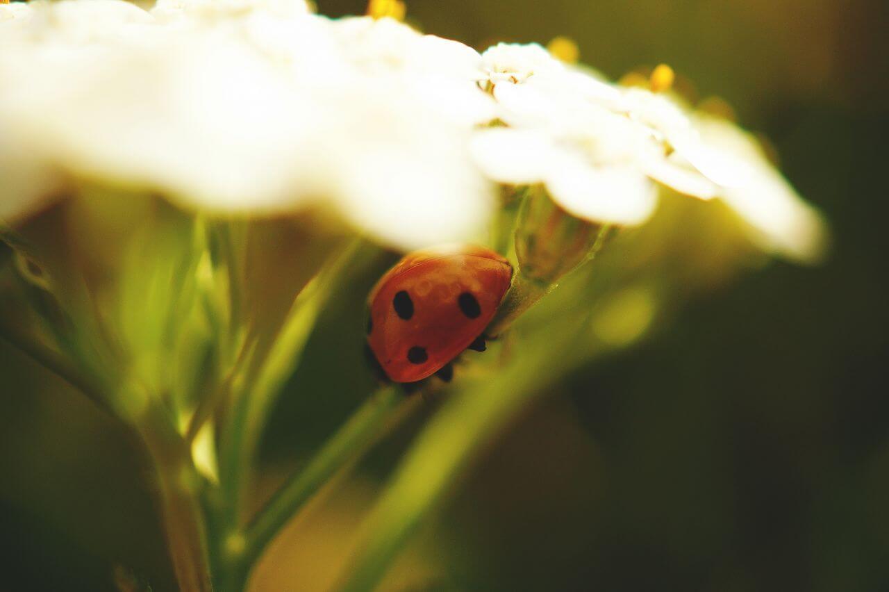 "Free photo ""Beetle"" by  George Becker"