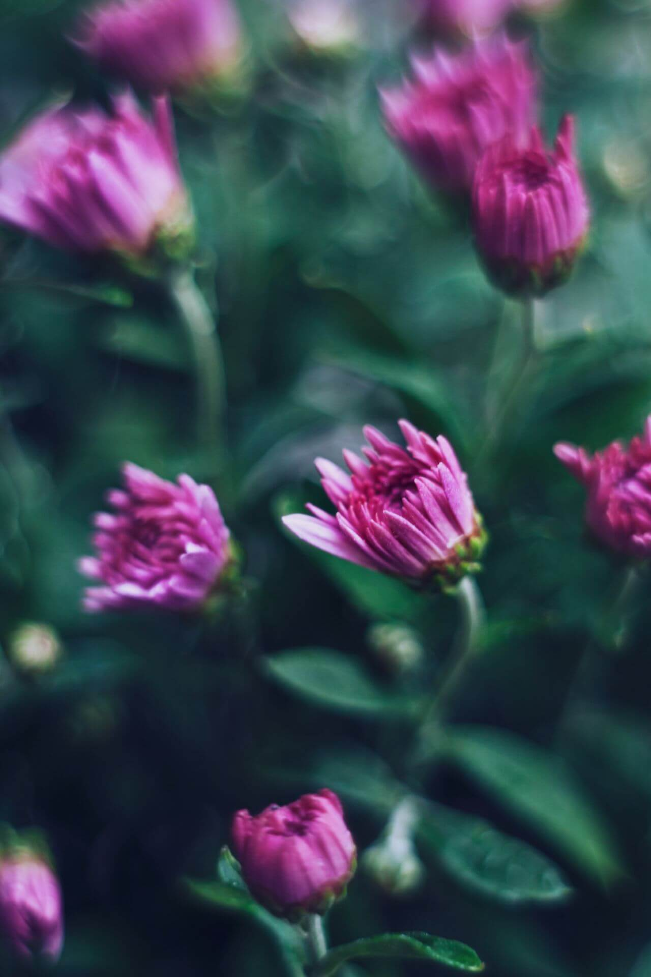 "Free photo ""Blooming"" by  Kaboompics // Karolina"