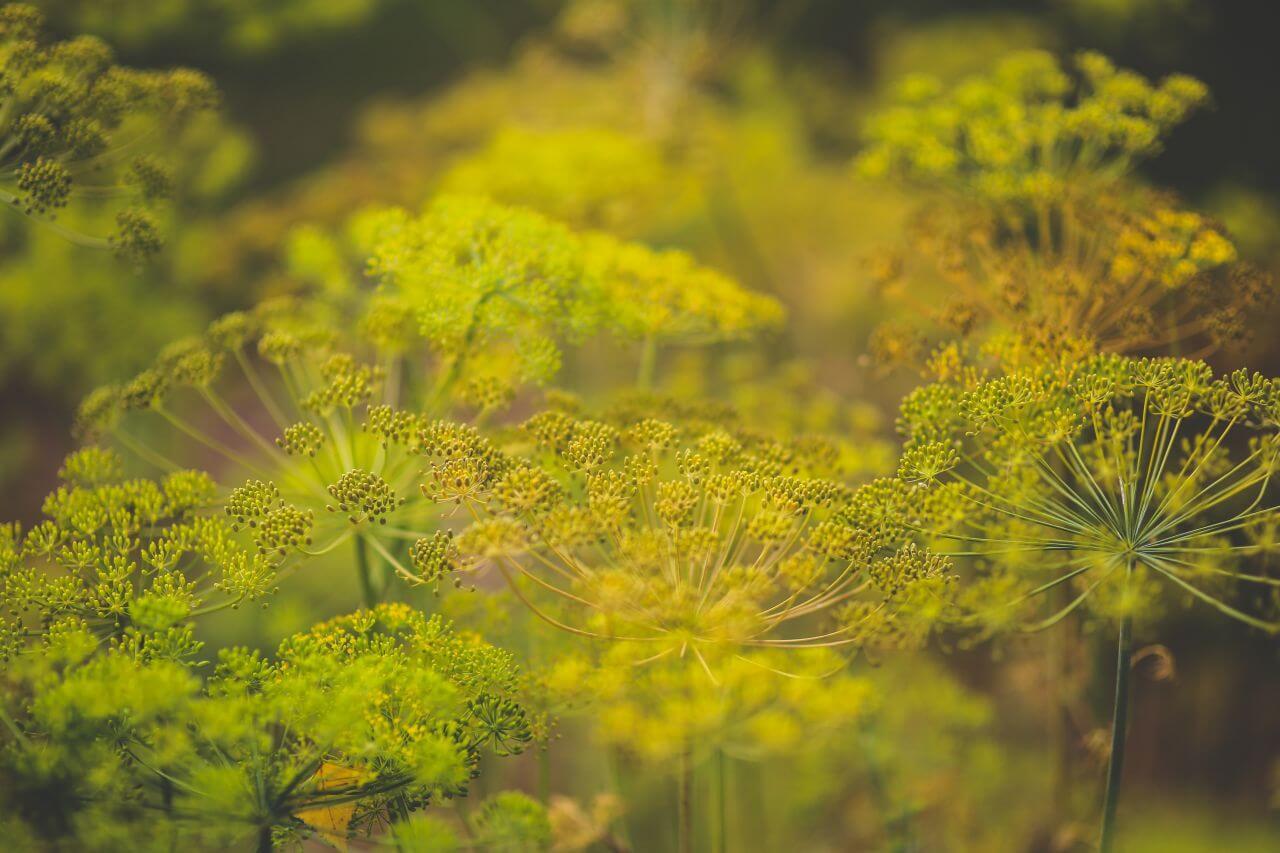 "Free photo ""Background"" by  Kaboompics // Karolina"