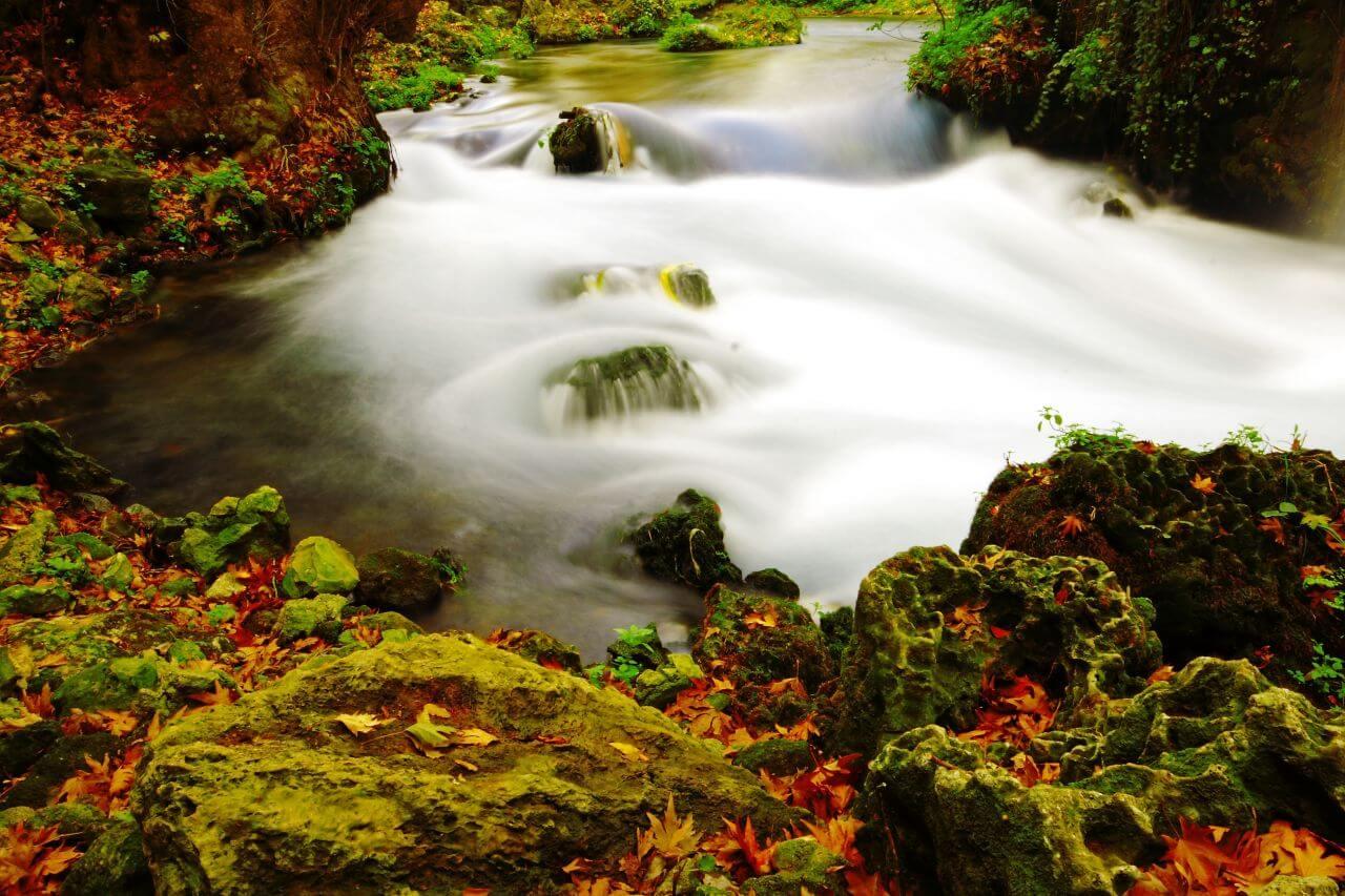 "Free photo ""Autumn"" by  Pixabay"