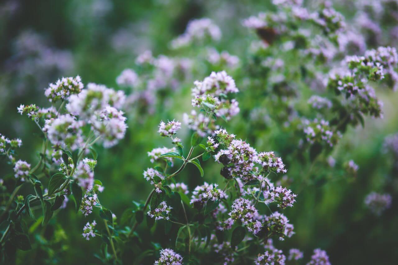 """Free photo """"Blooming"""" by  Kaboompics // Karolina"""