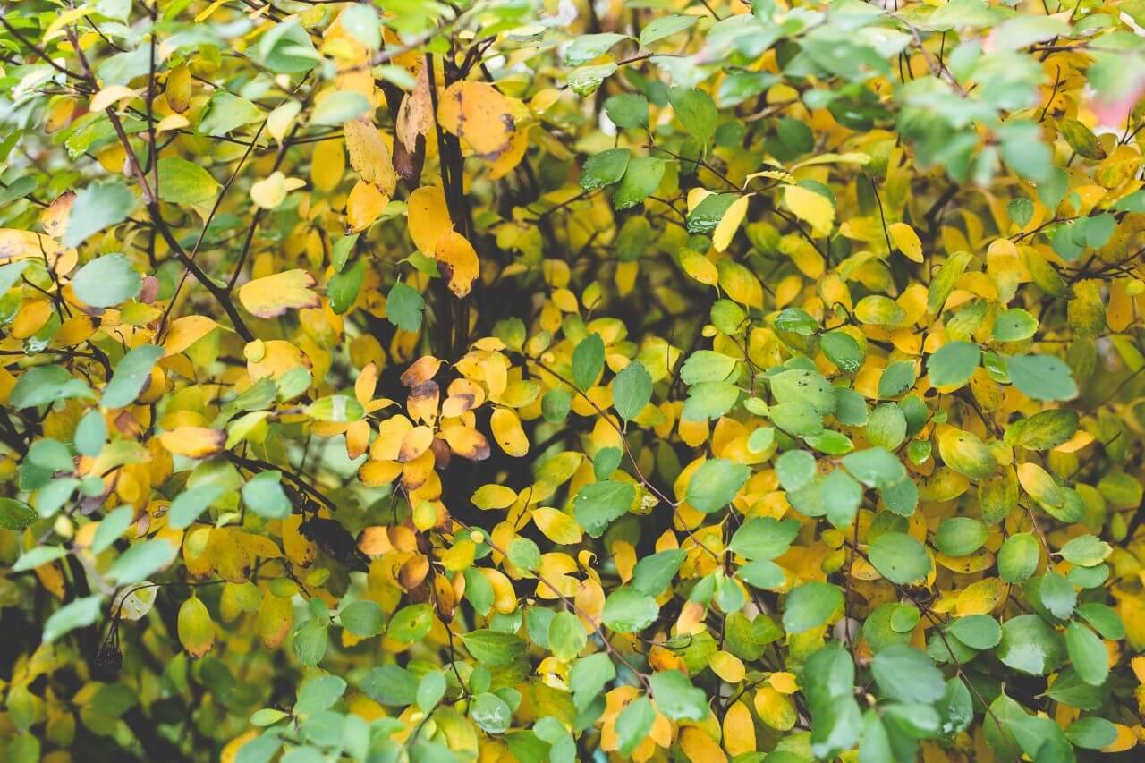 """Free photo """"Autumn"""" by  Kaboompics // Karolina"""
