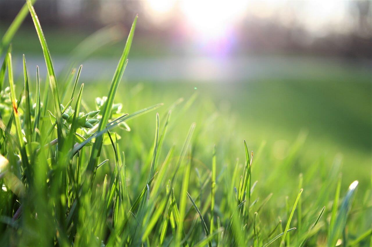 "Free photo ""Blade of grass"" by  Matthias Cooper"