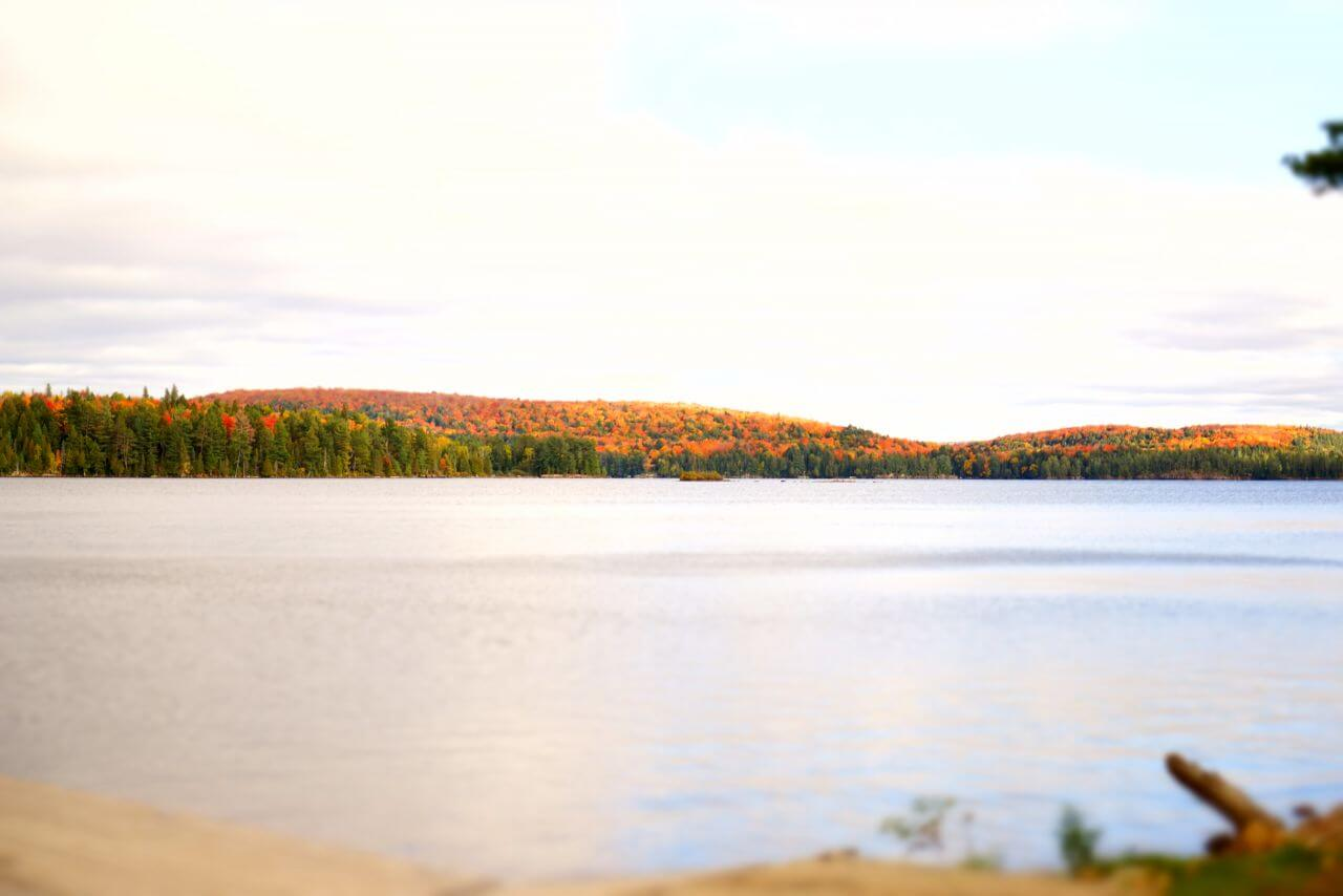 "Free photo ""Algonquin Provincial Park"" by  fan joo"