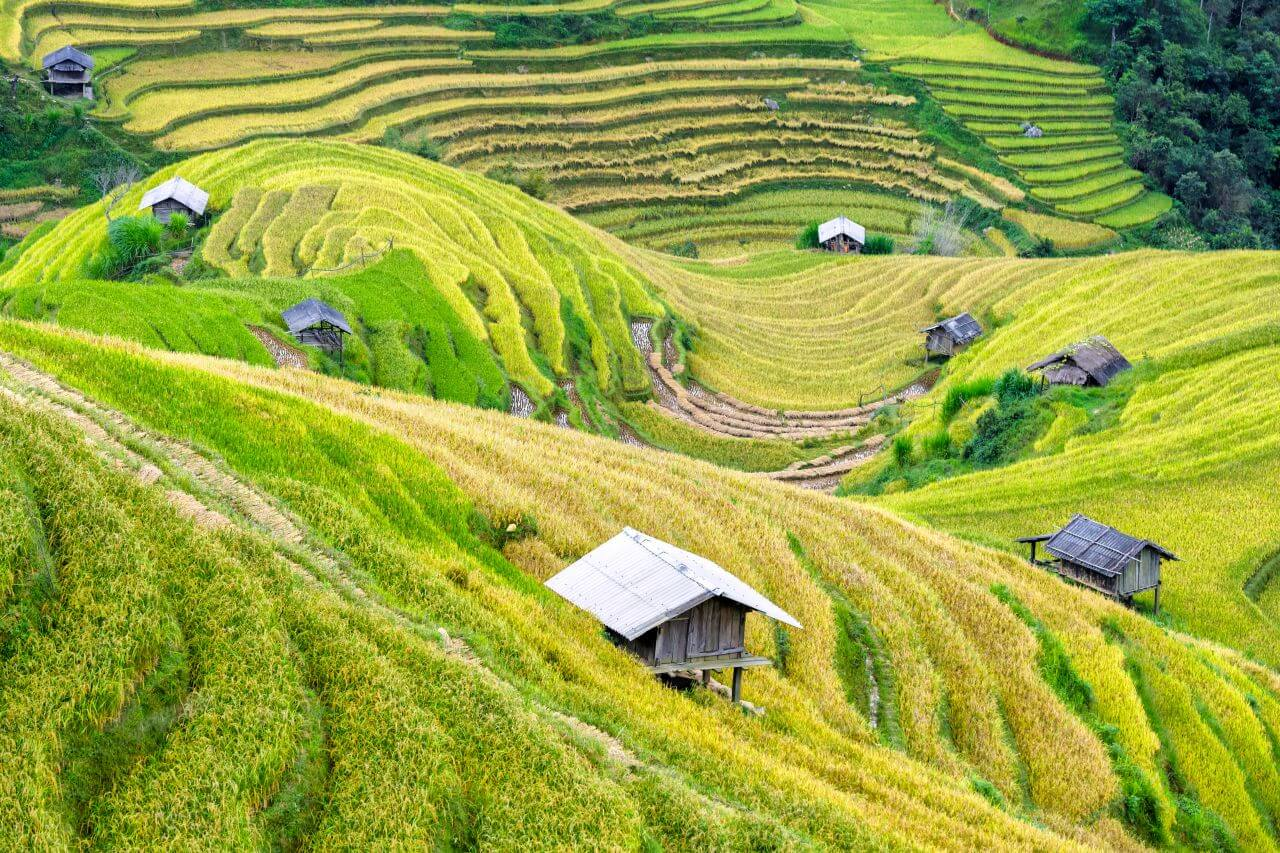 """Free photo """"Agriculture"""" by  Phan Dang Viet Tung"""