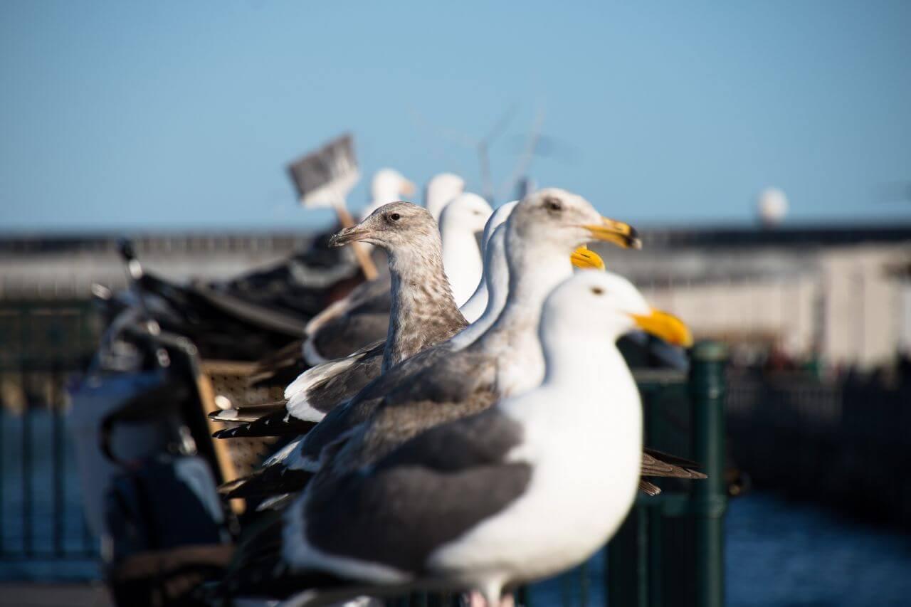 "Free photo ""Animal"" by  salvatore ventura"