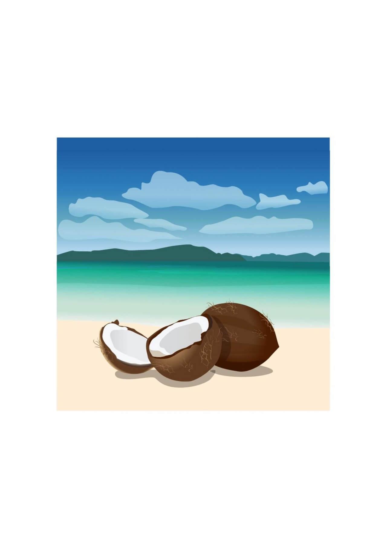 """Free vector """"Coconuts"""""""