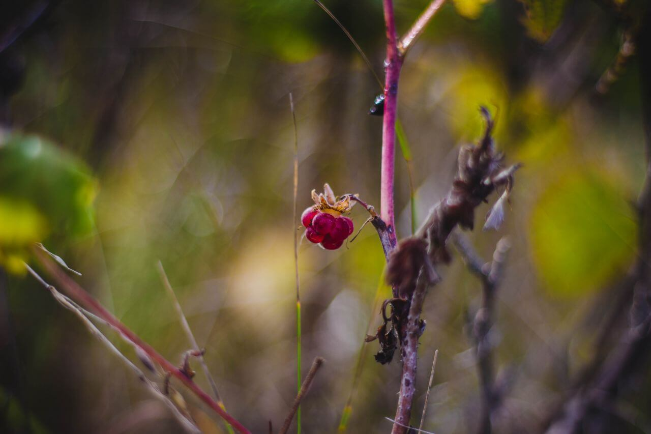 "Free photo ""Berries"" by  Valeria Boltneva"