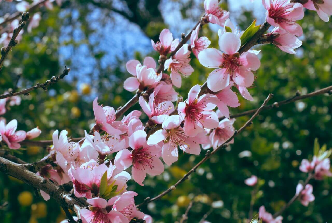 "Free photo ""Bloom"" by  Anelia"